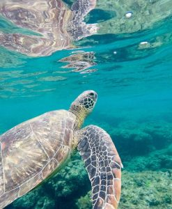 4Ocean Turtle Bracelet